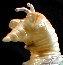 KaijuZoo Glow Marmit Mogera '57